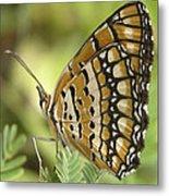 Butterfly 18 Metal Print