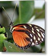 Key West Butterfly 2 Metal Print