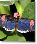 Key West Butterfly 3 Metal Print
