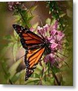 Butterfly 5 Metal Print