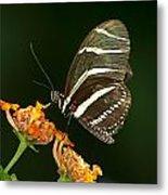 Butterfly 50 Metal Print