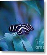 Butterfly 6 Metal Print