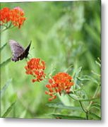 Butterfly A L'orange Metal Print