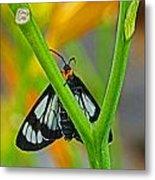 Butterfly An3597-13 Metal Print