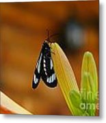 Butterfly An3606-13 Metal Print