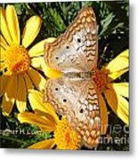 Butterfly And Daisies Metal Print