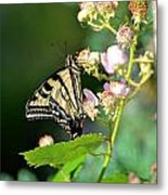 Butterfly And Flower. Metal Print