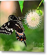 Butterfllies And The Crystal Balls Metal Print