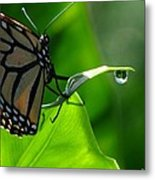 Butterfly And Water Metal Print