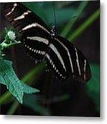 Butterfly Art 2 Metal Print