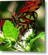 Butterfly Art Metal Print