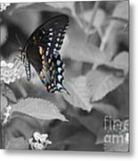 Butterfly Art Wings Together Metal Print