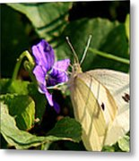 Butterfly At Flower Metal Print