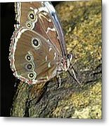 Butterfly At Night Metal Print