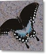 Butterfly At Rest Metal Print