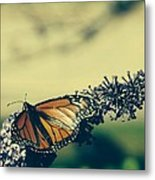 Butterfly At Royal Botanical Gardens Metal Print