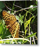 Butterfly At Signal Mountain Metal Print