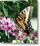 Butterfly At Work Metal Print