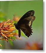 Butterfly Away Metal Print