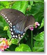 Butterfly Ballot Metal Print