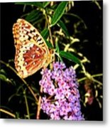 Butterfly Banquet 2 Metal Print by Will Borden