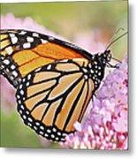 Butterfly Beauty-monarch II  Metal Print