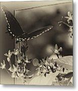 Butterfly Black 06 In Heirloom Finish Metal Print