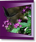 Butterfly Black 16 By 20 Metal Print
