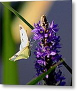 Butterfly - Cabbage White Metal Print