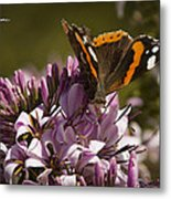 Butterfly Close Up Metal Print