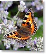 10088 Small Tortoiseshell Butterfly Metal Print