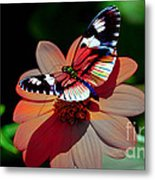 Butterfly Dont Fly Away Metal Print