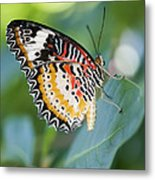 Butterfly Dreams Metal Print