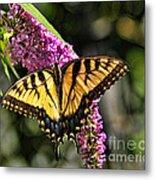 Butterfly - Eastern Tiger Swallowtail Metal Print