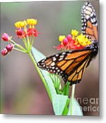 Butterfly Flower - Gossamer Wings Embrace Candy Blossoms Metal Print