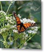 Butterfly Garden - Monarchs 09 Metal Print