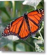 Butterfly Garden - Monarchs 10 Metal Print