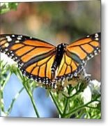 Butterfly Garden - Monarchs 13 Metal Print