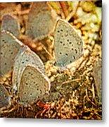 Butterfly Gathering Metal Print
