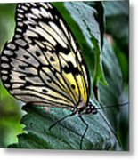 Butterfly - Green Leaf Metal Print