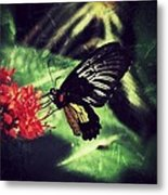 Butterfly Grunge Metal Print