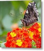 Butterfly Hanging Out On Wildflowers Metal Print