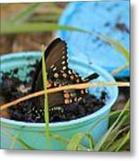 Butterfly In A Cup Metal Print