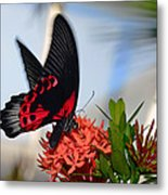 Butterfly In Action Metal Print
