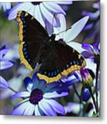 Butterfly In Blue Metal Print by Heidi Smith