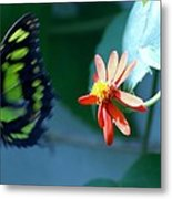 Butterfly In Flight Metal Print