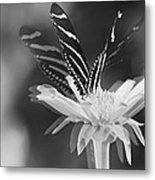 Butterfly In Motion #1952bw Metal Print