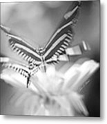 Butterfly In Motion #1961bw Metal Print