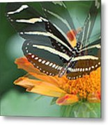 Butterfly In Motion #1968 Metal Print