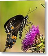 Butterfly In Nature Metal Print
